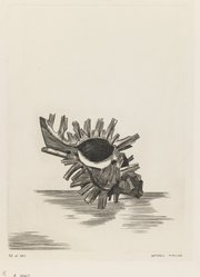 Kimura Shigeru (Japanese). <em>A Shell</em>. Etching, 8 7/16 x 6 1/4 in. (21.5 x 15.9 cm). Brooklyn Museum, Carll H. de Silver Fund, 63.67.3. © artist or artist's estate (Photo: Brooklyn Museum, 63.67.3_IMLS_PS3.jpg)