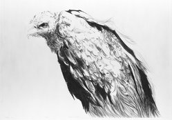 S. Patricia Benson (American, born 1941). <em>Vulture II</em>, 1968. Engraving Brooklyn Museum, Bristol-Myers Fund, 68.105.1. © artist or artist's estate (Photo: Brooklyn Museum, 68.105.1_acetate_bw.jpg)