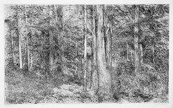 Richard Claude Ziemann (American, born 1932). <em>Woods in Summer</em>, 20th century. Etching on paper, sheet: 21 7/8 x 35 3/4 in. (55.6 x 90.8 cm). Brooklyn Museum, Carll H. de Silver Fund, 70.37.2. © artist or artist's estate (Photo: Brooklyn Museum, 70.37.2_bw.jpg)