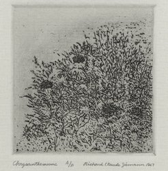 Richard Claude Ziemann (American, born 1932). <em>Chrysanthemums</em>, 1967. Etching on paper, sheet: 8 3/4 x 8 9/16 in. (22.2 x 21.7 cm). Brooklyn Museum, Gift of the artist, 77.162.8. © artist or artist's estate (Photo: Brooklyn Museum, 77.162.8_PS4.jpg)
