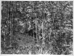 Richard Claude Ziemann (American, born 1932). <em>Sunlit Woods</em>, 1968-1969. Etching on paper, sheet: 35 1/8 x 44 in. (89.2 x 111.8 cm). Brooklyn Museum, Gift of Impressions Workshop, 77.274.10. © artist or artist's estate (Photo: Brooklyn Museum, 77.274.10_bw.jpg)