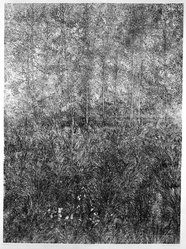Richard Claude Ziemann (American, born 1932). <em>Poplar Grove</em>, 1969-1970. Etching on paper, sheet: 44 3/4 x 35 5/8 in. (113.7 x 90.5 cm). Brooklyn Museum, Gift of Impressions Workshop, 77.274.11. © artist or artist's estate (Photo: Brooklyn Museum, 77.274.11_bw.jpg)