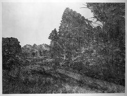 Richard Claude Ziemann (American, born 1932). <em>Edge of the Woods</em>, 1968-1969. Etching on paper, sheet: 34 3/4 x 44 in. (88.3 x 111.8 cm). Brooklyn Museum, Gift of Impressions Workshop, 77.274.4. © artist or artist's estate (Photo: Brooklyn Museum, 77.274.4_bw.jpg)