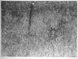Richard Claude Ziemann (American, born 1932). <em>Fall Foliage</em>, 1969-1970. Etching on paper, sheet: 35 1/8 x 44 in. (89.2 x 111.8 cm). Brooklyn Museum, Gift of Impressions Workshop, 77.274.9. © artist or artist's estate (Photo: Brooklyn Museum, 77.274.9_bw.jpg)