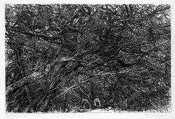 Patricia Tobacco Forrester (American, 1940-2011). <em>Daphne's Garden</em>, 1970. Etching, Sheet: 22 x 30 in. (55.9 x 76.2 cm). Brooklyn Museum, Designated Purchase Fund, 77.77.1. © artist or artist's estate (Photo: Brooklyn Museum, 77.77.1_bw.jpg)