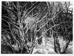 Patricia Tobacco Forrester (American, 1940-2011). <em>Streaming Cypress</em>, 1968. Etching, Sheet: 22 3/8 x 30 in. (56.8 x 76.2 cm). Brooklyn Museum, Gift of the artist, 78.13.11. © artist or artist's estate (Photo: Brooklyn Museum, 78.13.11_bw.jpg)