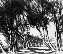 Roi Partridge (American, 1888-1984). <em>Water Willows</em>, 1925. Etching on wove paper, sheet: 7 1/2 x 8 1/2 in. (19.1 x 21.6 cm). Brooklyn Museum, Gift of the artist, 78.97.4. © artist or artist's estate (Photo: Brooklyn Museum, 78.97.4_bw.jpg)