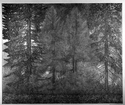Richard Claude Ziemann (American, born 1932). <em>Edge of the Forest</em>, 1975. Etching and engraving on paper, sheet: 24 7/8 x 27 3/8 in. (63.2 x 69.5 cm). Brooklyn Museum, Designated Purchase Fund, 80.150.1. © artist or artist's estate (Photo: Brooklyn Museum, 80.150.1_bw.jpg)