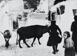 Mario Giacomelli (Italian, 1925-2000). <em>[Untitled]</em>, n.d. Gelatin silver photograph, sheet: 11 7/16 x 15 9/16 in. (29.1 x 39.5 cm). Brooklyn Museum, Gift of Dr. Daryoush Houshmand, 80.216.14. © artist or artist's estate (Photo: Brooklyn Museum, 80.216.14_PS1.jpg)