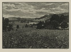 Warren Bryan Mack (American, 1896-1952). <em>Queen Anne's Lace</em>, 1946. Wood engraving on paper, sheet: 9 5/8 x 12 13/16 in. (24.4 x 32.5 cm). Brooklyn Museum, Frank L. Babbott Fund, 81.90.5. © artist or artist's estate (Photo: Brooklyn Museum, 81.90.5_PS2.jpg)