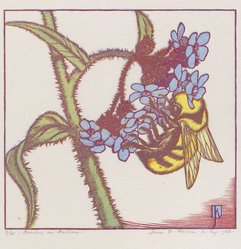 James D. Havens (American, 1900-1960). <em>Bombus on Anchusa</em>, 1938. Wood engraving in color, Sheet: 9 1/2 x 10 9/16 in. (24.2 x 26.9 cm). Brooklyn Museum, Frank L. Babbott Fund, 81.98.5. © artist or artist's estate (Photo: Brooklyn Museum, 81.98.5_PS4.jpg)