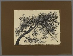 Peter Blume (American, 1906-1992). <em>Untitled (Branch of Tree)</em>, 1957. India ink on Japanese paper, 8 1/4 x 11 in. (21 x 27.9 cm). Brooklyn Museum, Bequest of Nancy S. Holsten in memory of Edward L. Holsten, 87.204.13. © artist or artist's estate (Photo: Brooklyn Museum, 87.204.13_PS4.jpg)