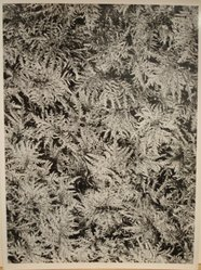 Jan Lukas (Czechoslovakian, 1915-2006). <em>Untitled</em>, ca. 1930s. Gelatin silver photograph, 7 × 9 1/2 in. (17.8 × 24.1 cm). Brooklyn Museum, Gift of Richard Abrams, 1992.274.29. © artist or artist's estate (Photo: Brooklyn Museum, CUR.1992.274.29.jpg)