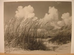 Arthur Hammond (American, 1880-1962). <em>Reeds and Sand</em>. Photograph, 11 x 14 in. (27.9 x 35.6 cm). Brooklyn Museum, Gift of the artist, 40.557. © artist or artist's estate (Photo: Brooklyn Museum, CUR.40.557.jpg)
