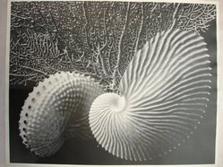 Grace Ballentine (American, 1881-1978). <em>Nature Patterns</em>. Chloride-toned gelatin silver photographs, sheet: 10 1/2 x 13 1/2 in. (26.7 x 34.3 cm). Brooklyn Museum, Gift of the artist, 41.1245. © artist or artist's estate (Photo: Brooklyn Museum, CUR.41.1245.jpg)