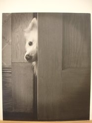 Pedro E. Hernandez (American). <em>Peeping Tom</em>. Photograph, 13 1/2 x 15 1/2 in. (34.3 x 39.4 cm). Brooklyn Museum, Gift of the artist, 42.434 (Photo: Brooklyn Museum, CUR.42.434.jpg)