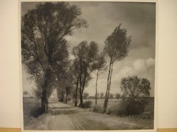 Herman de Wetter (American, born Estonia, 1880-1950). <em>Veils of Green</em>, 1945. Photograph, 13 x 13 1/2 in. (33 x 34.3 cm). Brooklyn Museum, Gift of Mrs. Herman de Wetter, 52.161.2. © artist or artist's estate (Photo: Brooklyn Museum, CUR.52.161.2.jpg)