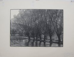 Warren Bryan Mack (American, 1896-1952). <em>Willows on the Water</em>, n.d. Wood engraving on paper, sheet: 15 13/16 x 20 3/8 in. (40.2 x 51.8 cm). Brooklyn Museum, Designated Purchase Fund, 77.119.2. © artist or artist's estate (Photo: Brooklyn Museum, CUR.77.119.2.jpg)