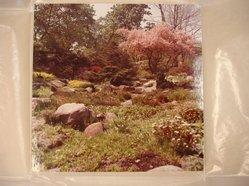 Benjamin Attas (American, born 1921). <em>Rock Garden - Brooklyn Botanic Gardens</em>, ca. 1960. Silver dye bleach photograph (cibachrome) Brooklyn Museum, Gift of the artist, 79.197.3. © artist or artist's estate (Photo: Brooklyn Museum, CUR.79.197.3.jpg)