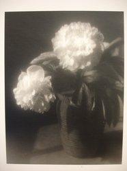 Julio Piedra (American, born 1937). <em>Untitled (Peonies)</em>, 1984. Gelatin silver photograph, sheet: 13 7/8 × 10 7/8 in. (35.2 × 27.6 cm). Brooklyn Museum, Gift of Carl J. Lana, 85.87.2. © artist or artist's estate (Photo: Brooklyn Museum, CUR.85.87.2.jpg)