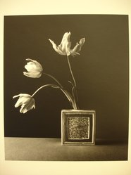 Julio Piedra (American, born 1937). <em>Untitled (Parrot tulips in ceramic vase)</em>, 1984. Gelatin silver photograph, sheet: 13 7/8 × 10 7/8 in. (35.2 × 27.6 cm). Brooklyn Museum, Gift of Carl J. Lana, 85.87.6. © artist or artist's estate (Photo: Brooklyn Museum, CUR.85.87.6.jpg)