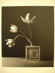 Julio Piedra (American, born 1937). <em>Untitled (Parrot tulips in ceramic vase)</em>, 1984. Gelatin silver photograph, sheet: 13 7/8 × 10 7/8 in. (35.2 × 27.6 cm). Brooklyn Museum, Gift of Carl J. Lana, 85.87.6. © artist or artist's estate (Photo: Brooklyn Museum, CUR.85.87.6.jpg)